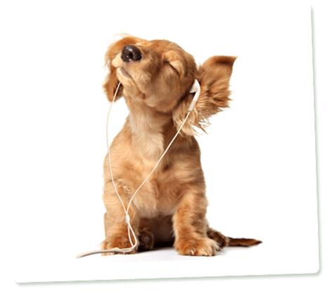 090717-sound-dog