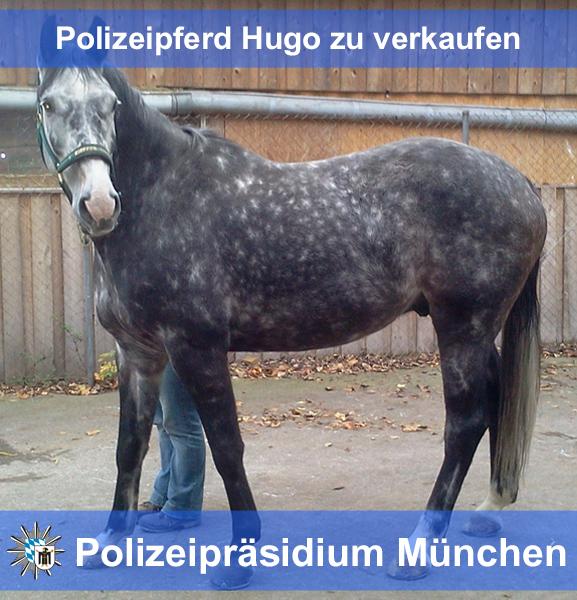 Facebook-Star Polizeipferd Hugo: Tier-Content geht (fast) immer