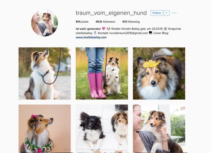 traum_vom_eigenen_hund